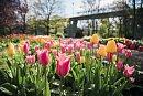 Vyhrajte vstupenky na jarní Floru Olomouc