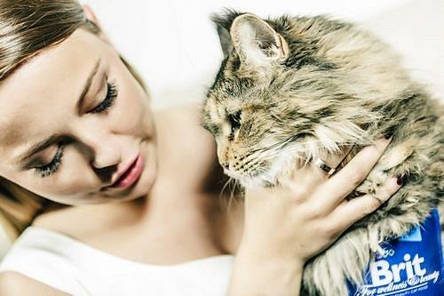 SOUTĚŽ:  Brit Premium pro lepší život vaší kočky