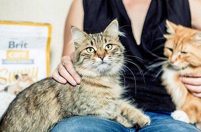 SOUTĚŽ: Brit Care Cat – Krmivo pro všechny kočičí osobnosti