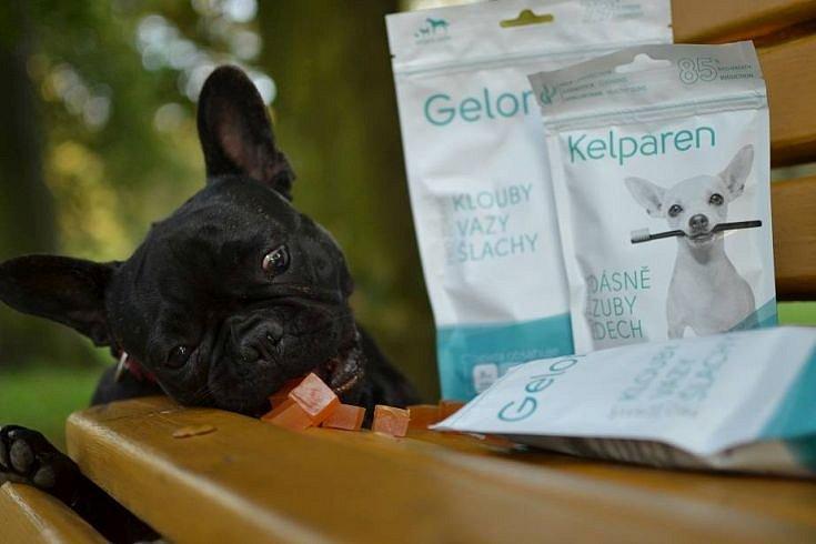 Soutěž o veterinární doplňky a další produkty od Aktivního zvířete