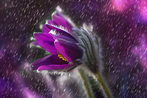 Jarní fotosoutěž / o 222 Kč
