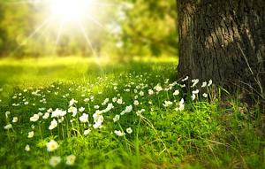 Jarní fotosoutěž